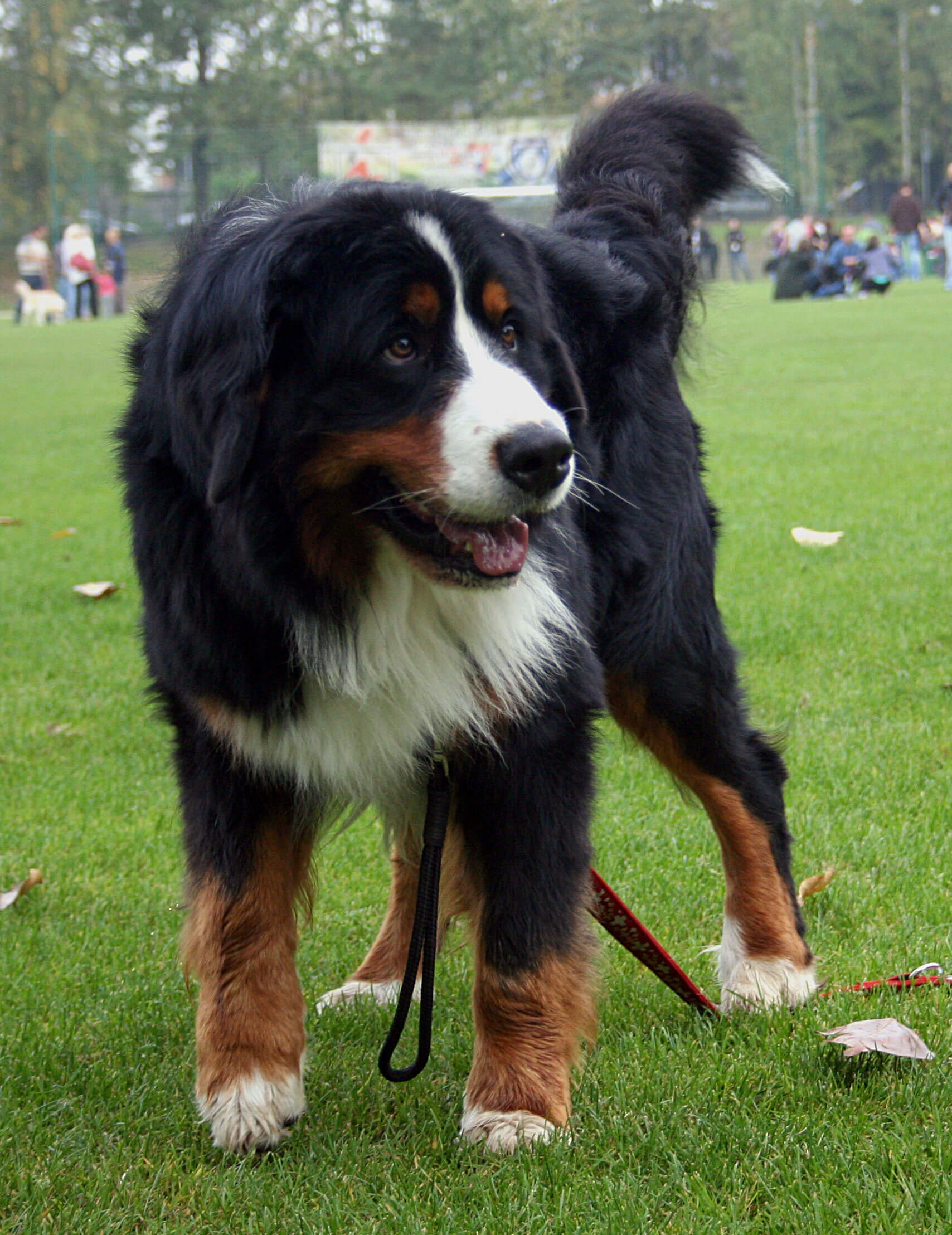 Mountain Dog Breeds List