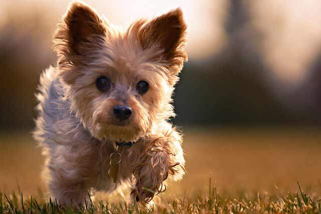 Which Dog Breed Is Best For You