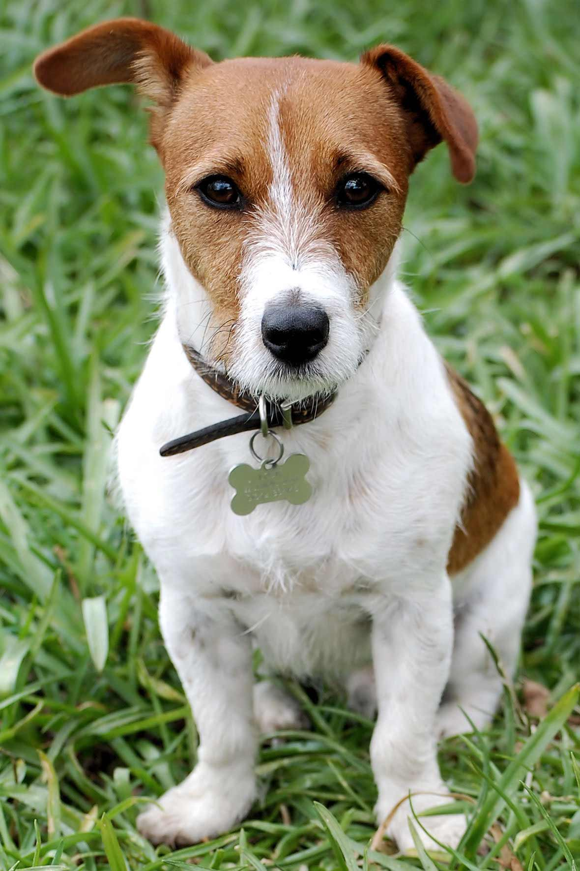 Jack Russell salary