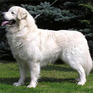 Slovak Dog Names