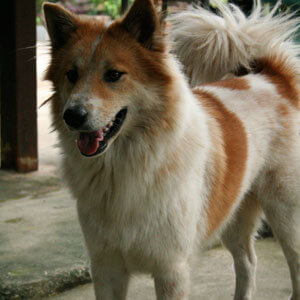 Forum on this topic: How to Groom a Difficult Dog, how-to-groom-a-difficult-dog/