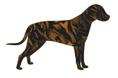 Black and Orange Striped Dogs