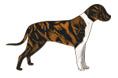 White, Black, and Orange Striped Dogs