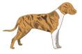 White, Dark Brown, Gold Striped Dogs
