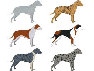 Dog Coloring Complete Chart Of Dog Coat Colors